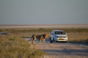 Autokennzeichen in Namibia haben einen gelben Grund mit schwarzer Aufschrift.