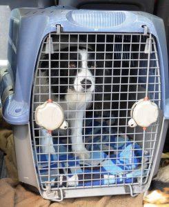 Eine Transportbox ermöglicht den sichern Transport von Tieren im Auto.